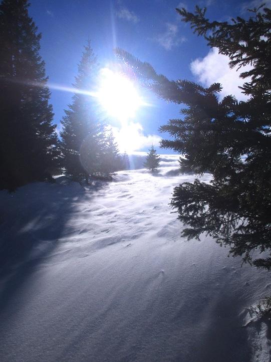 Foto: Andreas Koller / Schneeschuhtour / Hebalm - Klassiker Bärofen (1720m) / 19.02.2021 03:14:03