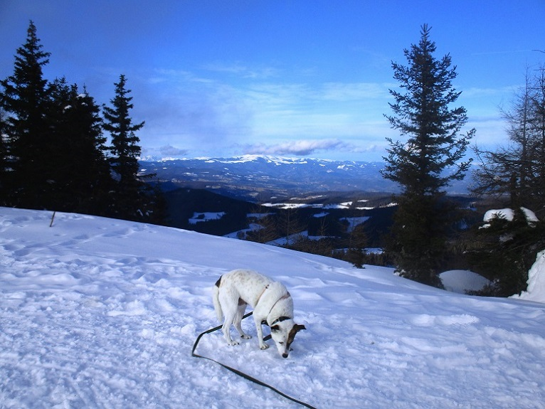Foto: Andreas Koller / Schneeschuhtour / Hebalm - Klassiker Bärofen (1720m) / 19.02.2021 03:12:47