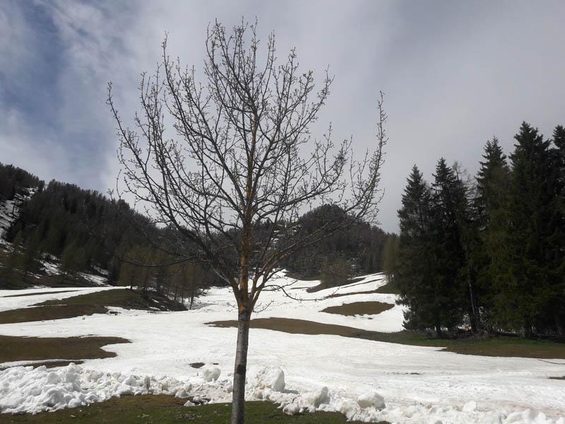 Foto: Rupert Gredler / Skitour / Schwarzkopf über den Nordrücken / Nur mehr auf der beschneiten Piste Schnee. / 21.02.2021 13:47:32