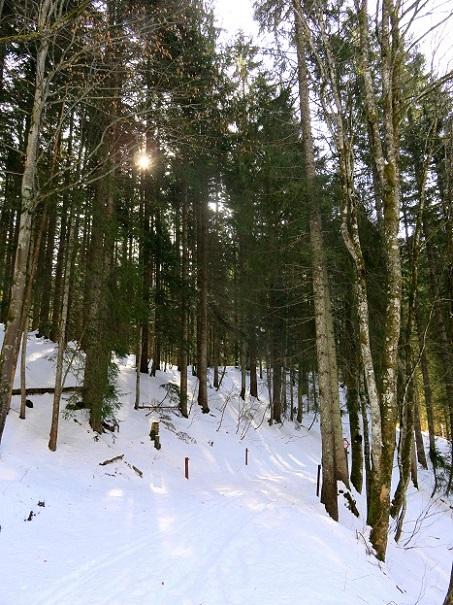 Foto: Andreas Koller / Skitour / Vom Pyhrnpass auf den Lahnerkogel (1854m) / Hier geht es gleich in den Wald / 01.05.2021 18:24:43