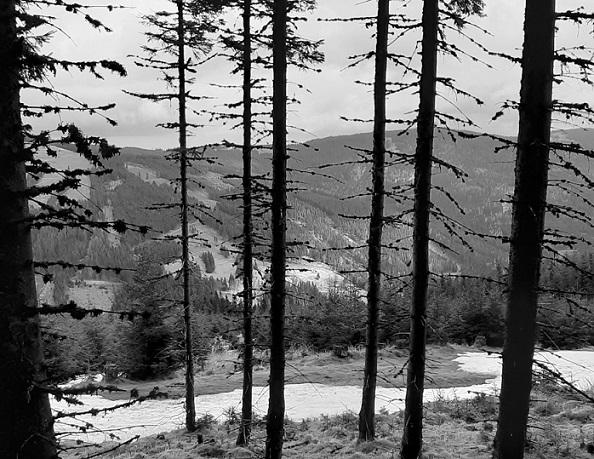 Foto: Wolfgang Dröthandl / Wandertour / Wildwasserpfad Mariensee - Runde / Am Forstweg zur Marienseer Schwaig, Blick auf den Kampstein / 02.05.2021 19:13:05