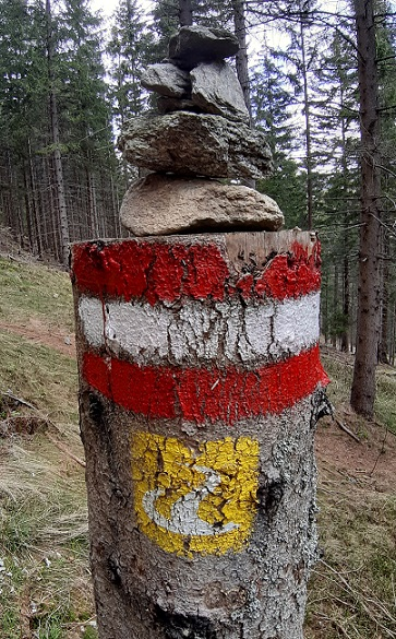 Foto: Wolfgang Dröthandl / Wandertour / Wildwasserpfad Mariensee - Runde / Steilabstieg auf dem Schind(e)lsteig / 02.05.2021 19:10:25