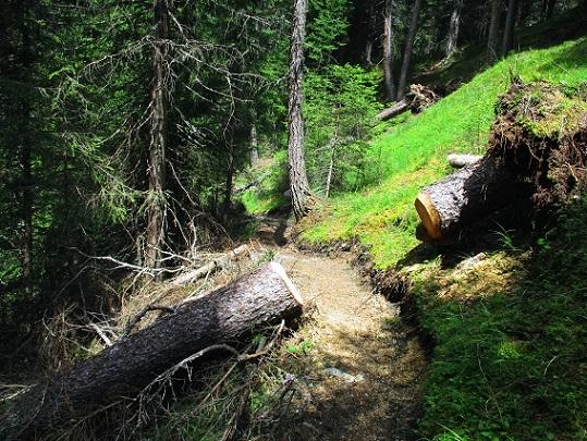 Foto: Andreas Koller / Klettersteigtour / Klettersteig Trafoi (1575m) / Schöner Rückweg nach Trafoi / 02.05.2021 23:31:20