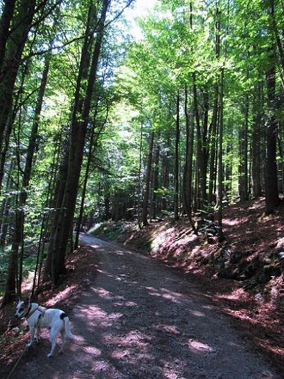 Foto: Andreas Koller / Wandertour / Bio-Tour Kranzhorn (1368m) / Aufstieg zum Kranzhorn / 08.06.2021 23:54:58