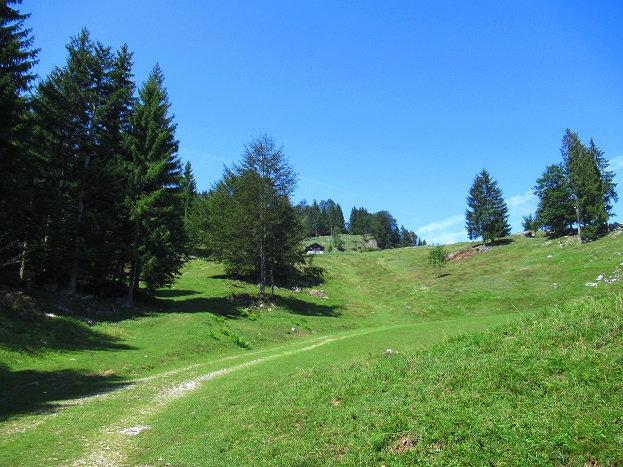 Foto: Andreas Koller / Wandertour / Bio-Tour Kranzhorn (1368m) / 08.06.2021 23:54:30