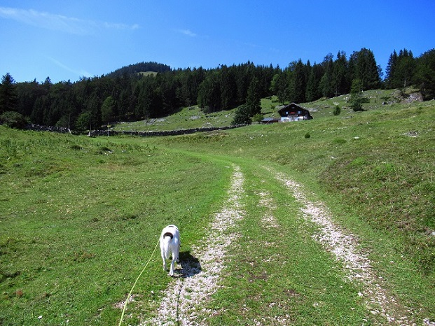 Foto: Andreas Koller / Wandertour / Bio-Tour Kranzhorn (1368m) / 08.06.2021 23:54:25