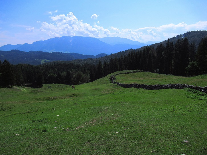Foto: Andreas Koller / Wandertour / Bio-Tour Kranzhorn (1368m) / 08.06.2021 23:54:20