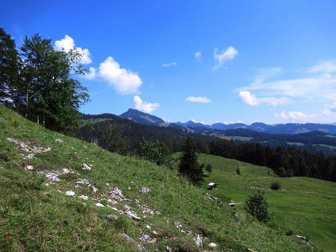 Foto: Andreas Koller / Wandertour / Bio-Tour Kranzhorn (1368m) / 08.06.2021 23:54:15