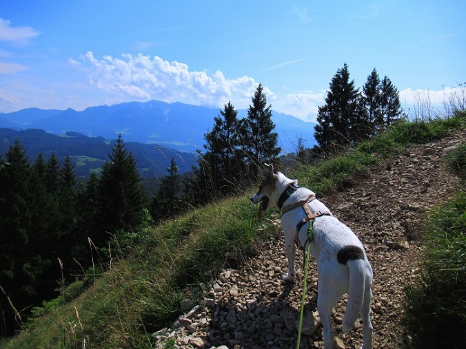 Foto: Andreas Koller / Wandertour / Bio-Tour Kranzhorn (1368m) / 08.06.2021 23:54:05