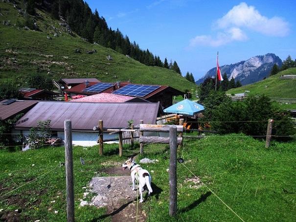 Foto: Andreas Koller / Wandertour / Bio-Tour Kranzhorn (1368m) / Kranzhornalm / 08.06.2021 23:53:48