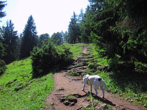 Foto: Andreas Koller / Wandertour / Bio-Tour Kranzhorn (1368m) / 08.06.2021 23:52:55