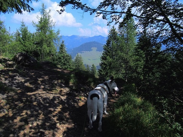 Foto: Andreas Koller / Wandertour / Bio-Tour Kranzhorn (1368m) / Abstieg vom Kranzhorn / 08.06.2021 23:50:49