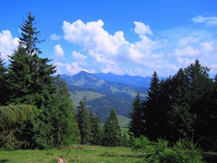 Foto: Andreas Koller / Wandertour / Bio-Tour Kranzhorn (1368m) / 08.06.2021 23:50:35