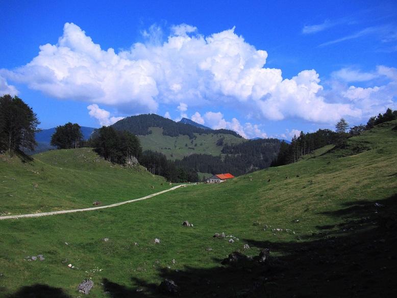 Foto: Andreas Koller / Wandertour / Bio-Tour Kranzhorn (1368m) / 08.06.2021 23:49:14