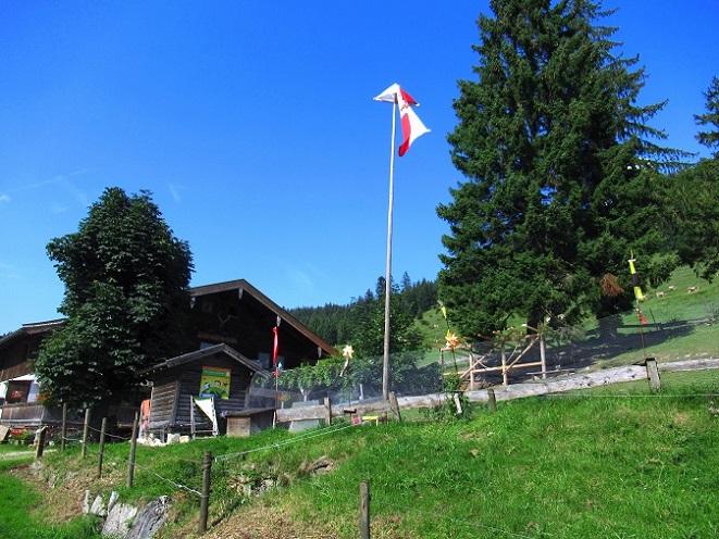 Foto: Andreas Koller / Wandertour / Bio-Tour Kranzhorn (1368m) / Hintermairalm (Bio-Alm) / 08.06.2021 23:48:59