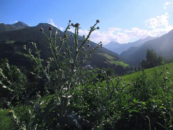 Foto: Andreas Koller / Klettersteigtour / Klettersteig Stuller Wasserfall (1320m) / 09.10.2021 17:16:27