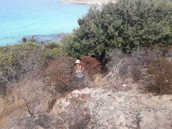 Foto: Rupert Gredler / Wandertour / Von der Punta Spanu nach Calvi / Und immer wieder durch die Maccia. / 13.10.2021 13:53:47
