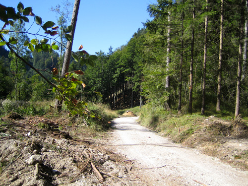 Foto: letsgoactive / Mountainbike Tour / Rund um den Schafberg - über den Falkenstein / Am Weg zur Eisenau ... / 18.04.2007 15:57:35