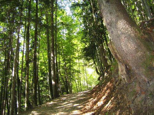 Foto: letsgoactive / Mountainbike Tour / Rund um den Schafberg - über den Falkenstein / Falkenstein, Achtung Fahrverbot / 18.04.2007 16:06:40