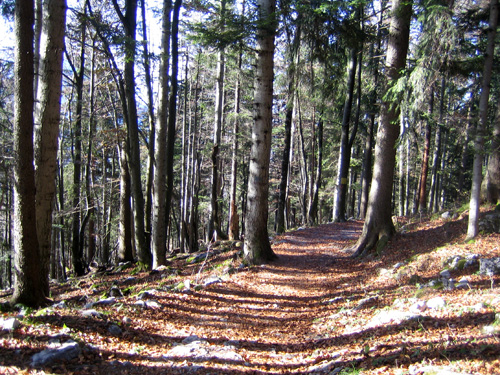 Foto: Hari M. / Mountainbiketour / Über die Glasenbachklamm auf die Fageralm / Verbindungsweg zur Fageralm / 28.12.2006 10:41:27