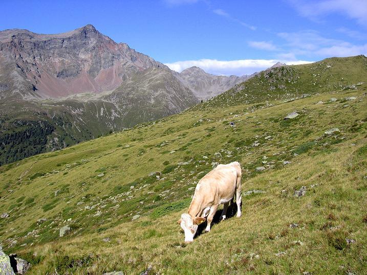 Foto: Andreas Koller / Wander Tour / Petzeck - höchster Gipfel der Schobergruppe (3283 m) / Am Gaimberger Feld gegen Hochschober (3242 m) / 18.08.2007 12:46:33