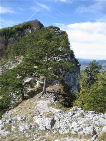 Foto: Jogal / Wander Tour / Von St. Lorenz auf die Drachenwand / 17.01.2007 01:15:47