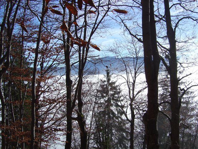 Foto: Jogal / Wander Tour / Von Grünau auf den Zwillingskogel / 17.01.2007 01:05:47