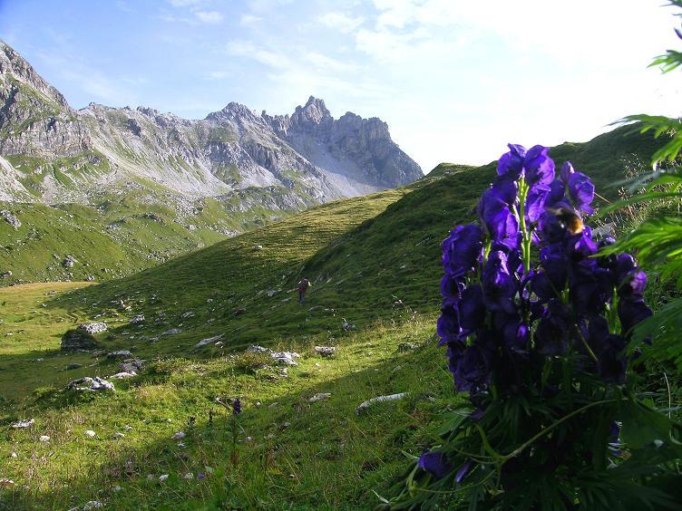 Foto: Andreas Koller / Wander Tour / Aus dem Riedingtal im Lungau auf das Mosermandl (2680 m) / Alpenflora unter dem Faulkogel (2654 m) / 17.08.2007 10:35:15