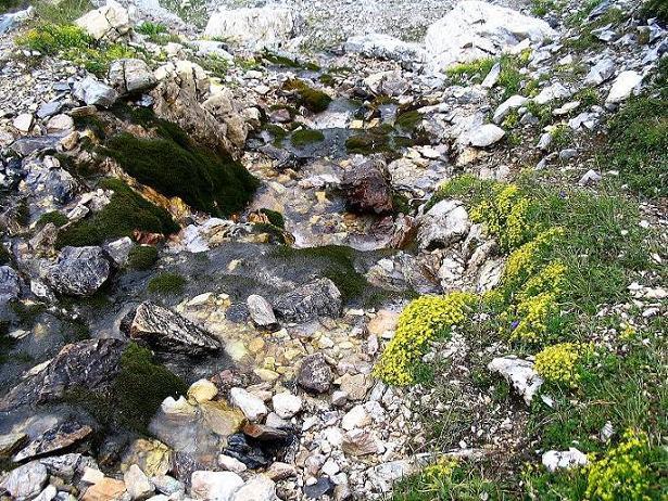 Foto: Andreas Koller / Wander Tour / Aus dem Riedingtal im Lungau auf das Mosermandl (2680 m) / Gebirgsbach unterhalb der Windischscharte / 17.08.2007 10:34:53