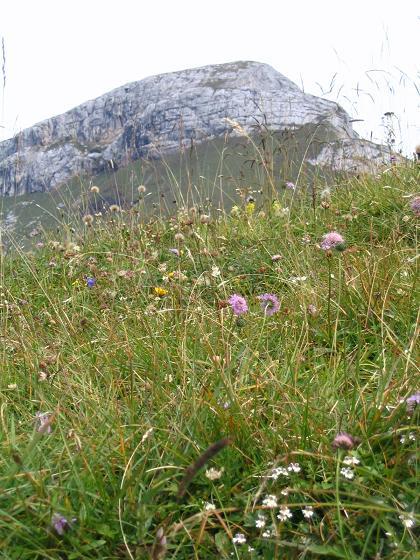 Foto: Andreas Koller / Wander Tour / Haidachstellwand und Schützensteig (2192 m) / Haidachstellwand von der Erfurter Hütte / 26.05.2007 13:44:55