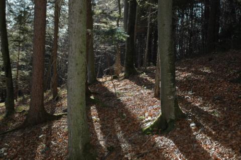 Foto: Richard Krammer / Wander Tour / Waxeneck Rundwanderung / Wunderschöner Mischwald mit Sonneneinstrahlung / 18.02.2007 18:47:04