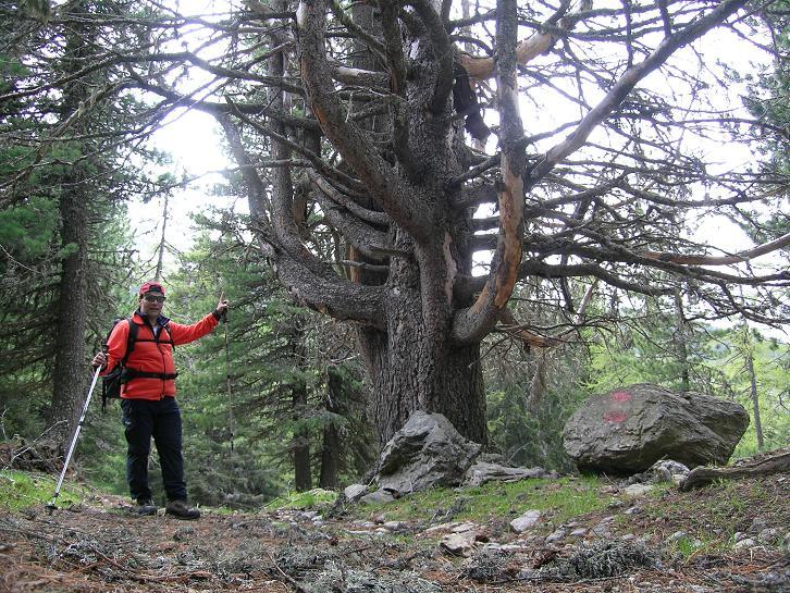 Foto: Andreas Koller / Wander Tour / Lattersteig und sechs Gipfel (2320 m) / Urwüchsiger Wald im Abstieg / 22.04.2007 22:16:20