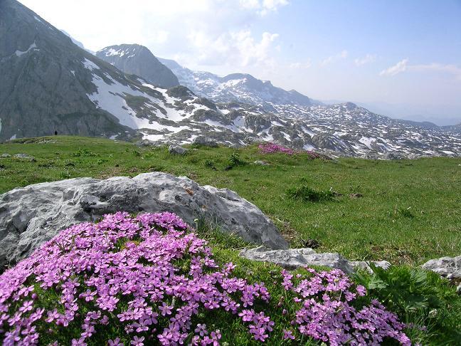 Foto: Andreas Koller / Wander Tour / Die Eselstein - Runde (2667 m) / Am blumenreichen Sinabell / 23.04.2007 14:07:26