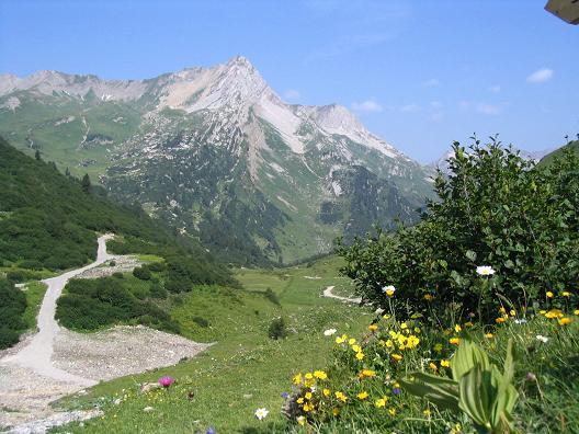 Foto: Andreas Koller / Wander Tour / Vom Spullersee auf den Spuller Schafberg (2679 m) / Großartige Flora im Lechquellengebirge / 24.04.2007 12:53:13