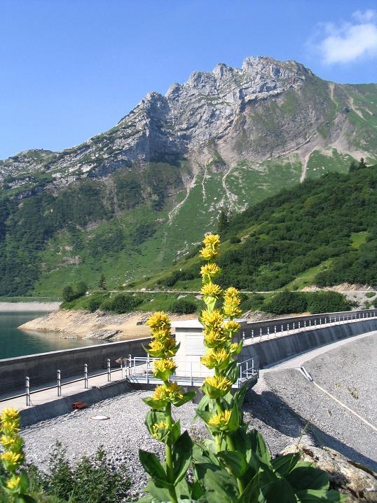 Foto: Andreas Koller / Wander Tour / Vom Spullersee auf den Spuller Schafberg (2679 m) / Pflanzenreichtum und Staumauer / 24.04.2007 12:54:49
