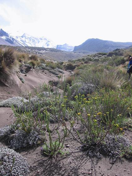 Foto: Andreas Koller / Wander Tour / Wandertour in große Höhen im Chimborazo-Massiv (4463 m) / Der Hand Richtung Chimborazo zum El Curipoguio / 11.05.2007 01:08:19