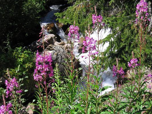 Foto: Andreas Koller / Wander Tour / Jamnighütte - Feldseekopf - Hagenerhütte (2864 m) /  Blumenreichtum im Tauerntal / 27.04.2007 20:04:25