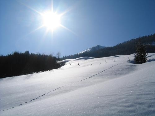 Foto: Christian Suschegg / Skitour / Kreuzköpfl (2094m) / Sanft geneigte Wiesenhänge oberhalb der Sulzbachalm / 03.01.2007 12:47:35
