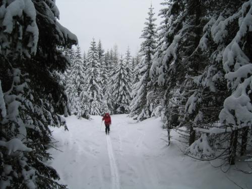 Foto: Christian Suschegg / Ski Tour / Tagkopf (2085m) / Aufstieg durch lichten Wald und Waldschneisen / 04.01.2007 13:58:58