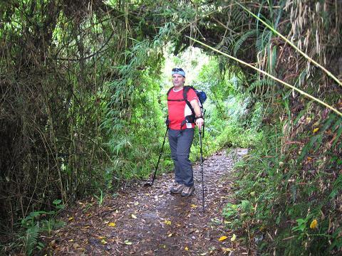 Foto: Andreas Koller / Wander Tour / Durch Regenwald auf den Pasochoa (4200 m) / Dichter, feuchter Wald zu Beginn der Tour / 09.01.2007 02:19:55