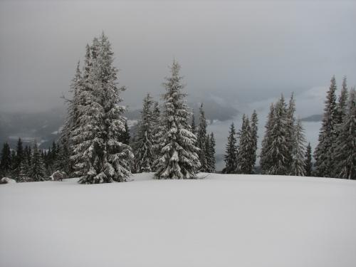 Foto: Christian Suschegg / Schneeschuh Tour / Mit Schneeschuhen auf die Hohe Trett (1681m) / Am freien Gipfelplateau / 08.01.2007 10:31:42