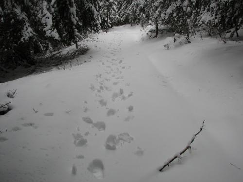 Foto: Christian Suschegg / Schneeschuh Tour / Mit Schneeschuhen auf die Hohe Trett (1681m) / Unschwierige gut markierte Forst- und Waldwege führen zum Gipfel / 08.01.2007 10:29:33