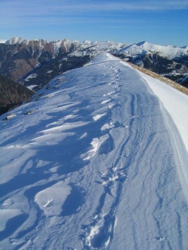 Foto: Christian Suschegg / Schneeschuh Tour / Winter-Gratwanderung zwischen Großsölktal und Donnersbachwald / Unterwegs am Grat zwischen Bärneck und Pleßnitzenkopf. / 08.01.2007 17:14:28