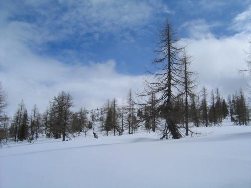 Foto: Christian Suschegg / Skitour / Über das Steinkar auf den Hochgrößen (2115m) / Aufstieg im lichten Wald oberhalb der Steinkaralm / 10.01.2007 13:05:37