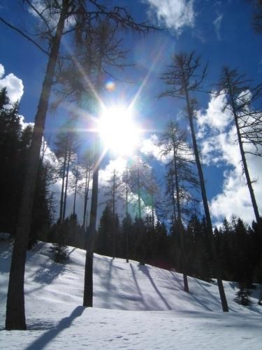 Foto: Christian Suschegg / Schneeschuhtour / Gritschenberg - Grasslherrgottweg - Zachenschöberl (1726m) / Aufstieg über mäßig steile, lichte Waldhänge / 10.01.2007 18:18:57