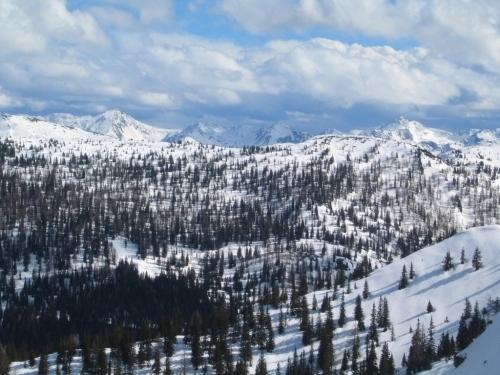 Foto: Christian Suschegg / Schneeschuhtour / Gritschenberg - Grasslherrgottweg - Zachenschöberl (1726m) / Herrliche, lichte Wälder für weitere Schneeschuhtouren / 10.01.2007 18:18:07