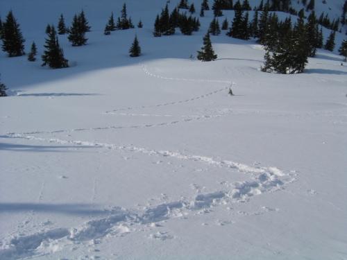 Foto: Christian Suschegg / Ski Tour / Horningalm - Schüttkogel (2049m) / Die Tour ist auch für geübte Schneeschuhgeher geeignet, allerdings wird es am letzten Abschnitt doch ziemlich anstrengend. / 11.01.2007 13:36:02