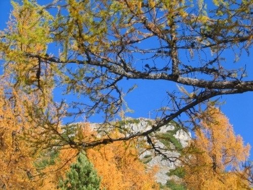 Foto: Christian Suschegg / Wander Tour / Ahornsee - Grafenbergalm - Kufstein (2049m) / Oberhalb der Stornalm. Blick hinauf zum nahen Gipfelkreuz am Kufstein. / 21.01.2007 17:58:40