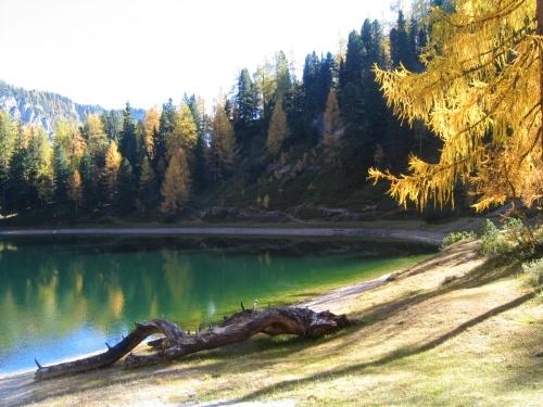 Foto: Christian Suschegg / Wander Tour / Ahornsee - Grafenbergalm - Kufstein (2049m) / Einige Baumstämme bieten Sitzgelegenheit und laden ein zum Verweilen. / 21.01.2007 18:07:33
