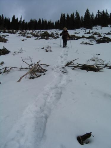 Foto: Christian Suschegg / Schneeschuh Tour / Aus der Walchen auf Totenkarspitz und Karlspitz / Über 2 große, stellenweise steile Schläge geht es abwärts. / 17.01.2007 19:29:24